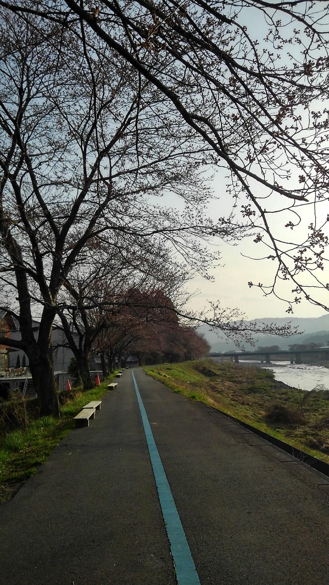 桜2018.4.1状況3