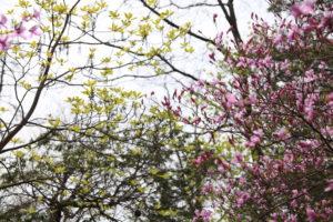 蛇谷ヶ峰 春の花と若葉