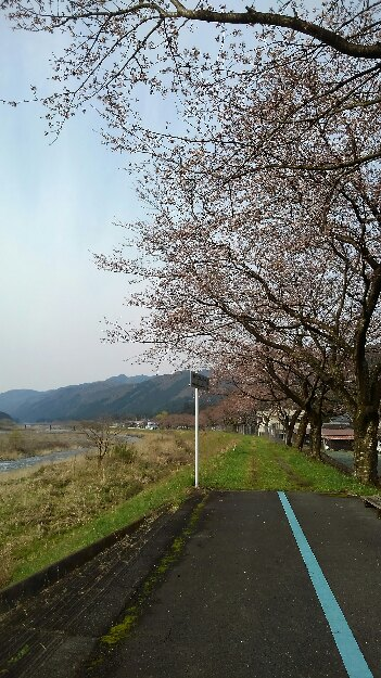 桜咲いたよ。