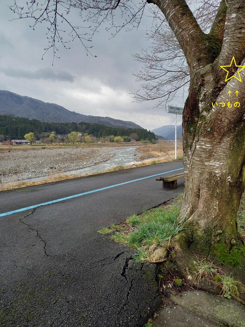 2021.3.22桜状況3